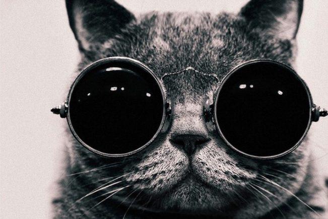 Goggles Cat